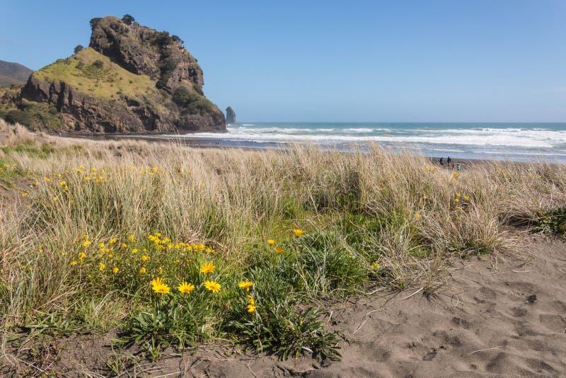 Yellow flowers on Piha beach stock photo