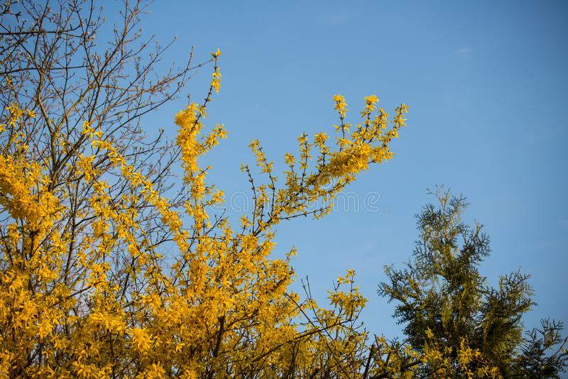 Yellow flowers shine against blue sky stock photo