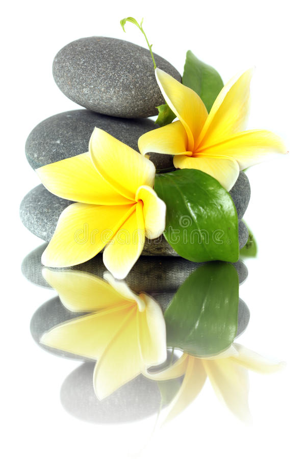 Download Yellow Flowers On Stacked Stones Stock Photo - Image: 15448588