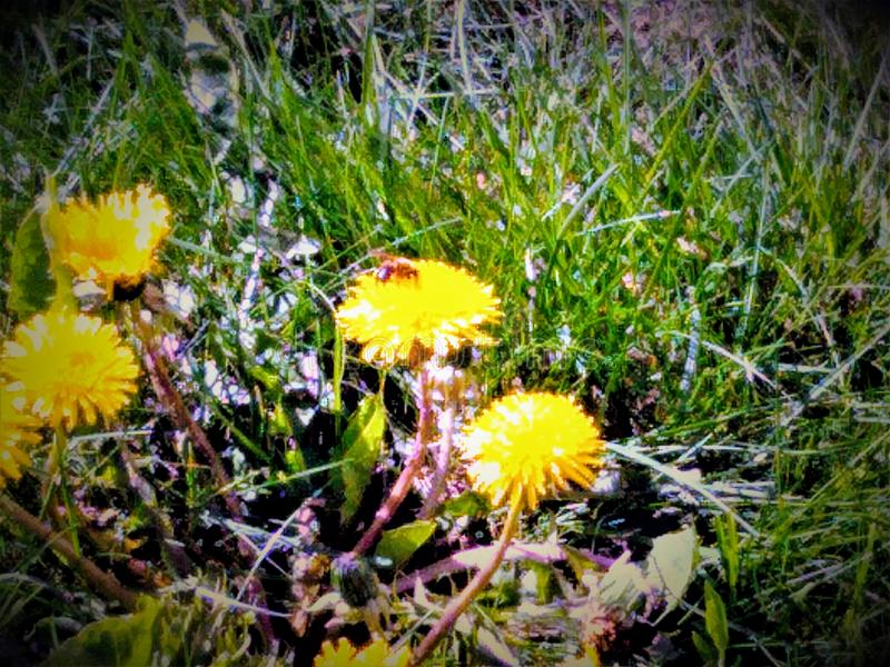 Yellow flowers and summer bee stock photo