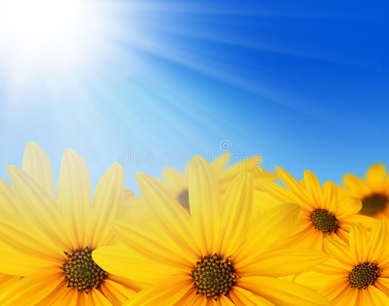 Download Yellow flowers in sun stock illustration. Illustration of close - 12308664