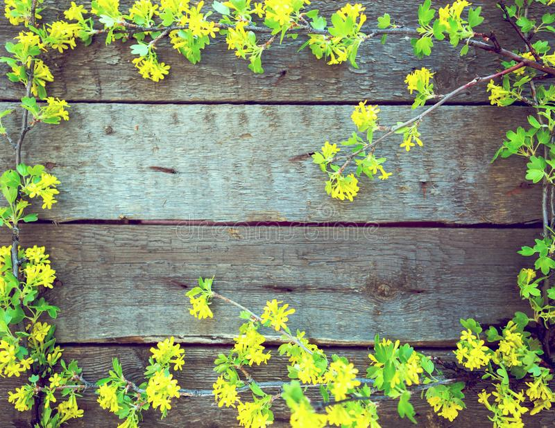 Yellow Flowers On Vintage Wooden Background. Concept