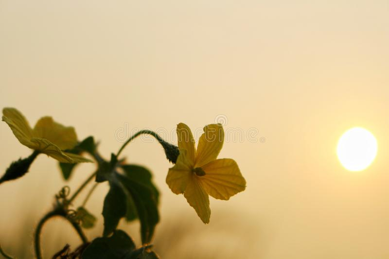 Yellow flowers in wild nature on beautiful sky background.  royalty free stock photography