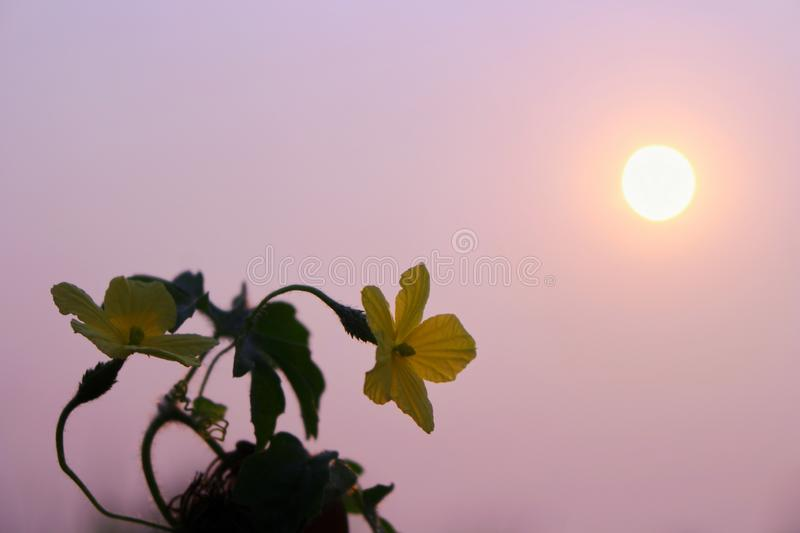 Yellow flowers in wild nature on beautiful sky background.  royalty free stock photos