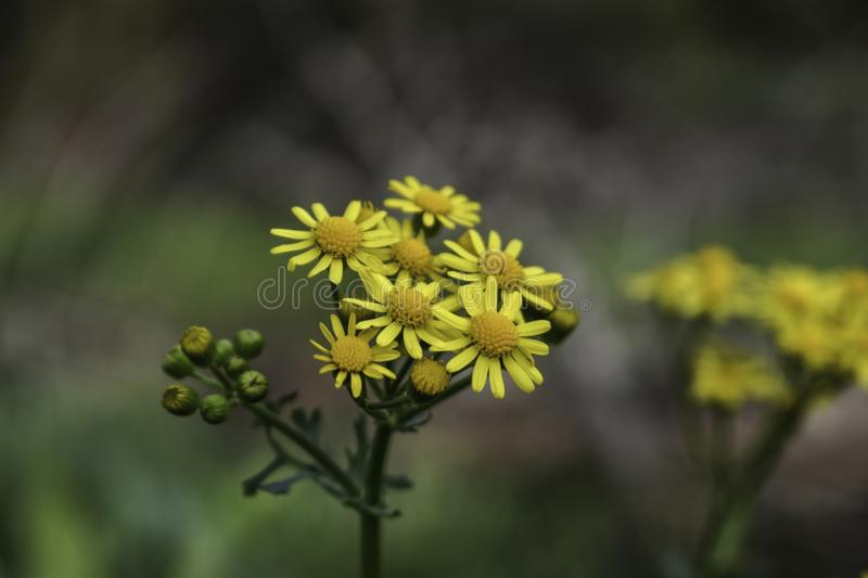 Yellow Flowers Zoomed In stock image