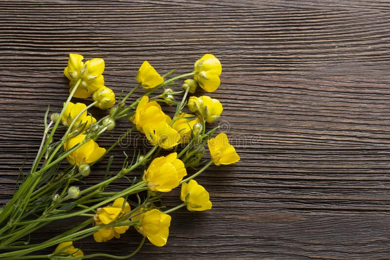 Yellow Forest Flower on wood background. Buttercup wildflower grows in meadows of Europe stock images