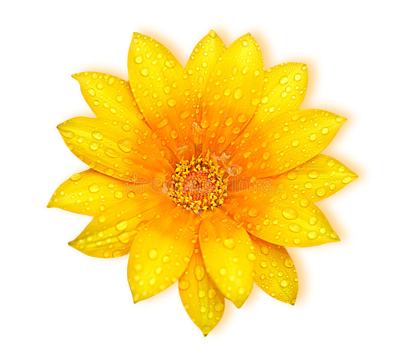 Yellow fresh flower royalty free stock photos
