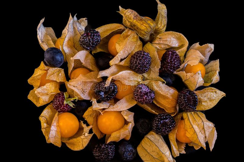 Yellow fresh physalis with dry leaves and  raspberries stock image