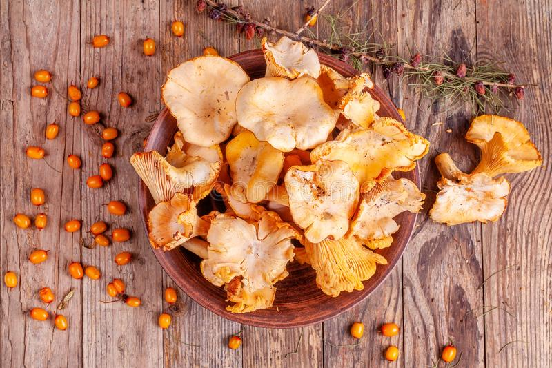 Yellow fresh raw chanterelles mushrooms in the bowl on the wooden background stock image