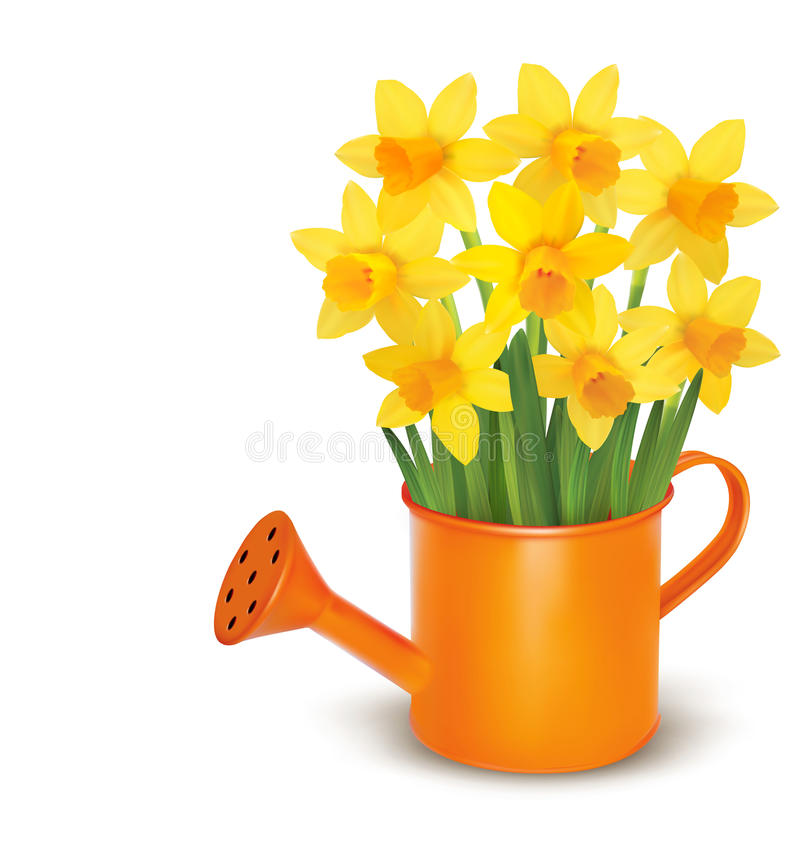 Yellow fresh spring flowers in green watering can. stock illustration