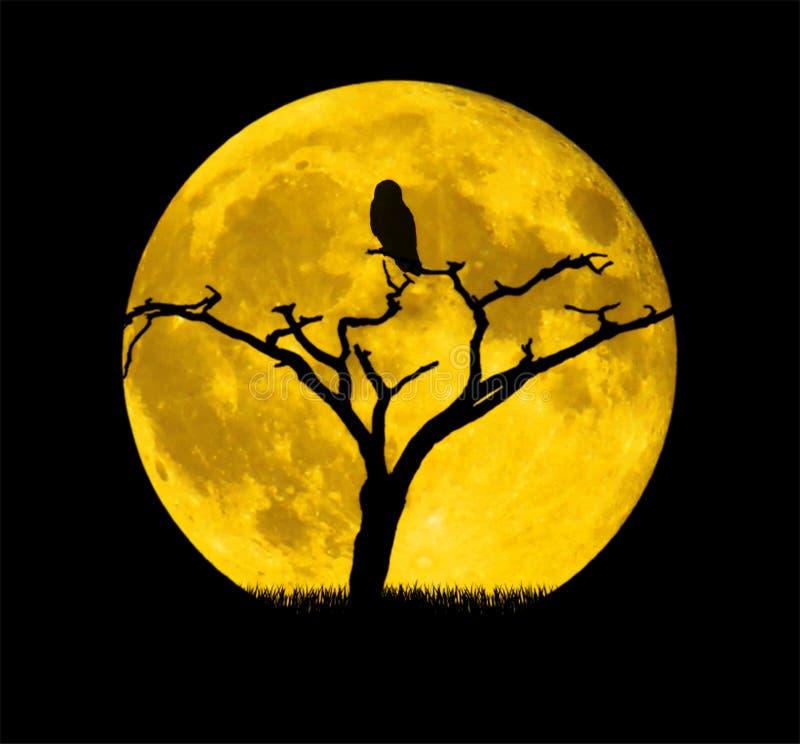 Yellow, Full Moon, Moon, Sky royalty free stock photos