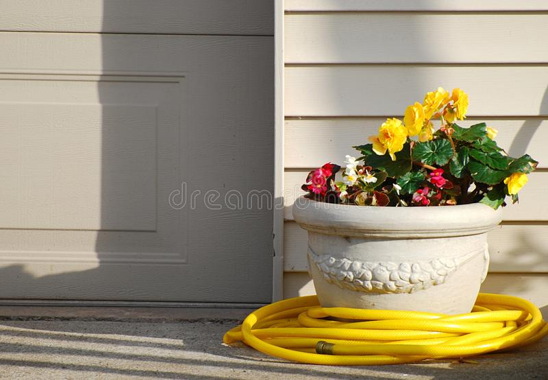 Yellow Garden Hose With Yellow Flowers stock photography