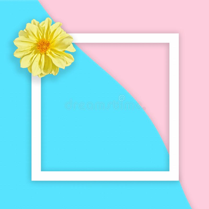 Yellow georgina on abstract sea and pink sand background with white flat frame square. Flat lay. Top view royalty free stock image