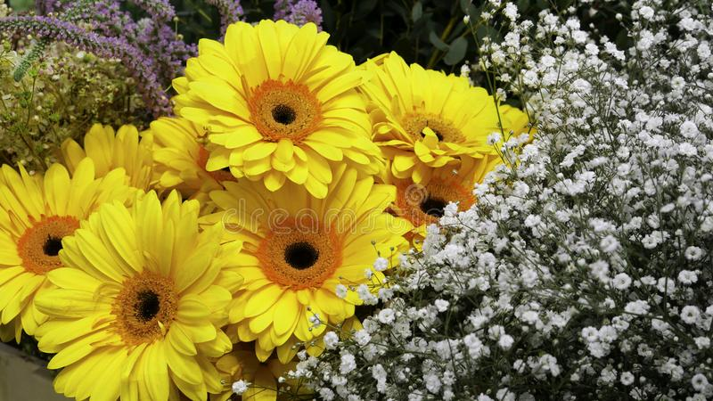 Yellow Gerber and small decorative flowers stock photo