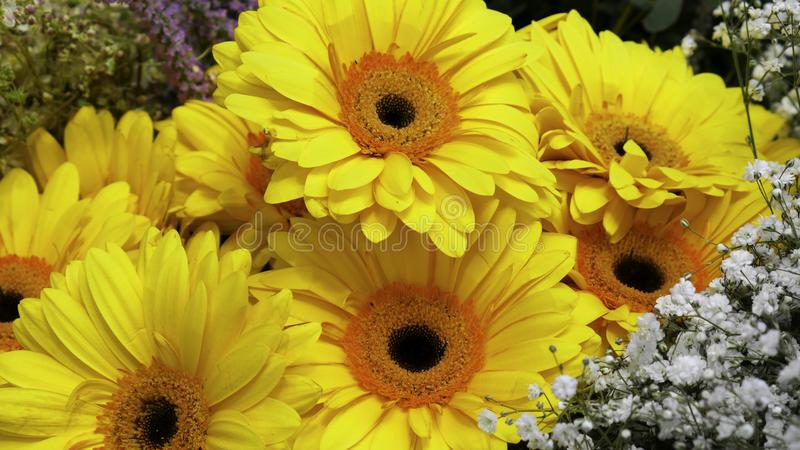 Yellow Gerber and small decorative white flowers royalty free stock images