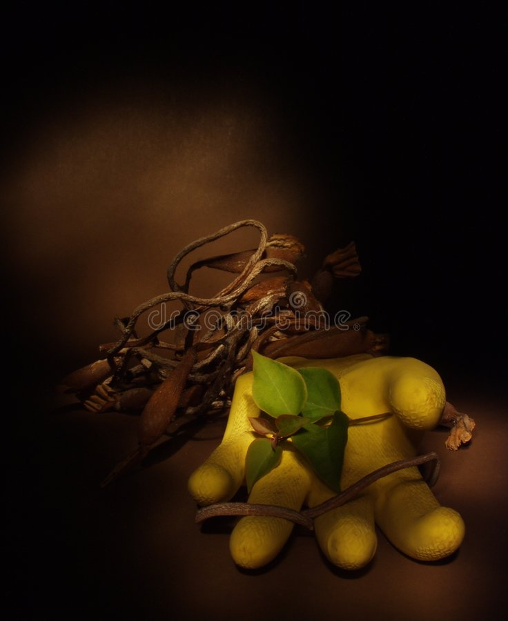 Download Yellow glove and vines stock image. Image of flora, brownish - 209149