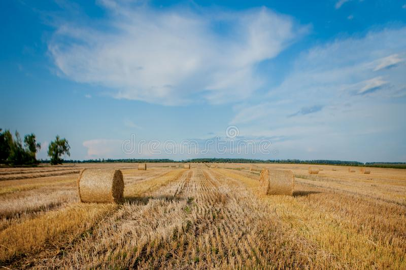 Yellow golden straw bales of hay in the stubble field, agricultural field under a blue sky with clouds. Straw on the meadow. stock photography
