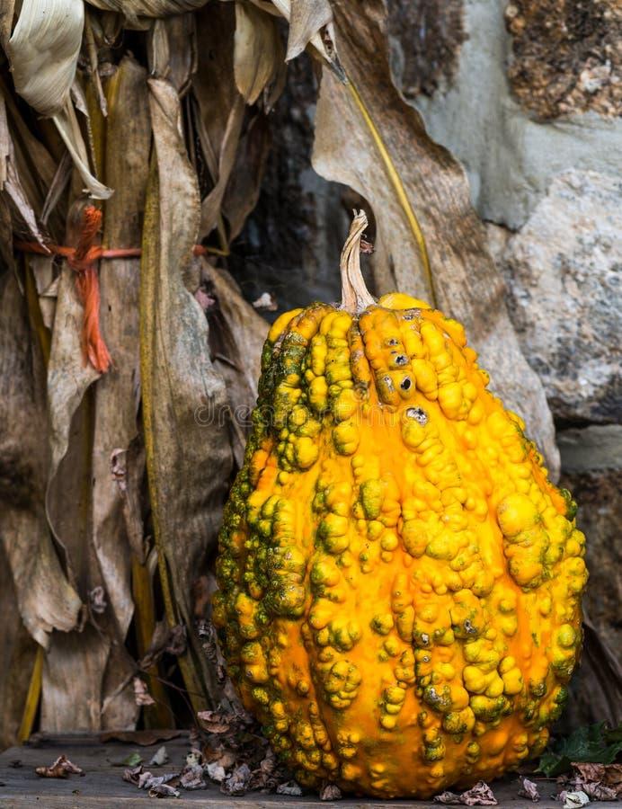 Free Yellow Gourd Stock Photo - 37529820