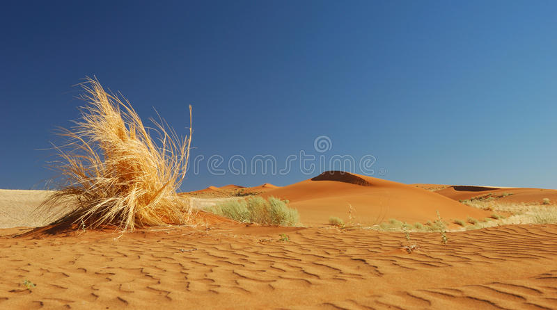 Download Yellow Grass stock photo. Image of waves, morning, namibia - 16401946