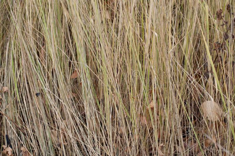 Yellow grass in autumn close up. Yellow grass background texture close up royalty free stock photography