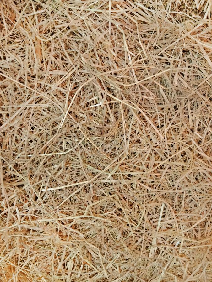 Yellow grass, Dry Straw texture and background stock photo