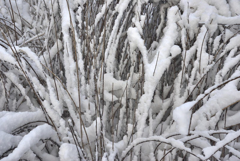 Download Yellow Grass Under The Dropped Out Snow Stock Photo - Image: 12695888
