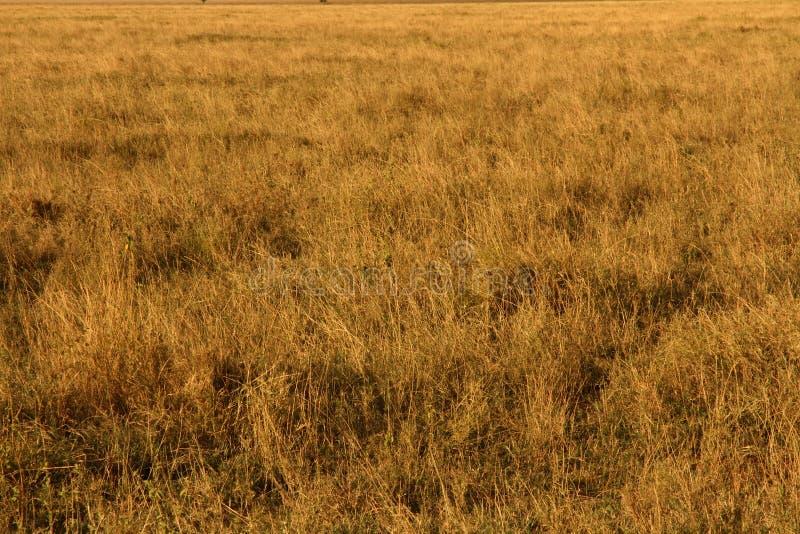 Yellow Grasslands royalty free stock image
