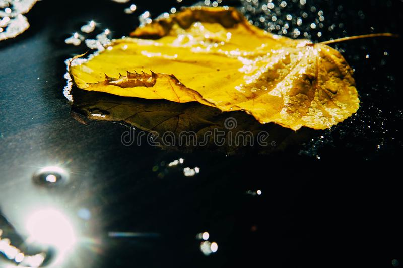 Yellow, green autumn leaves of trees frame the composition on a royalty free stock image