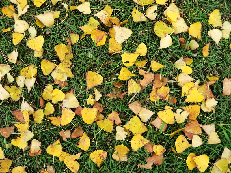 Yellow-green Autumn Rug Stock Images