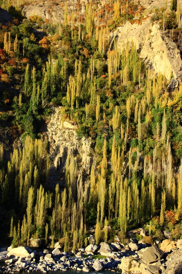 Yellow and Green of autumn trees on hillside. Under sunlight along the Karakorum highway in North of Pakistan royalty free stock photos