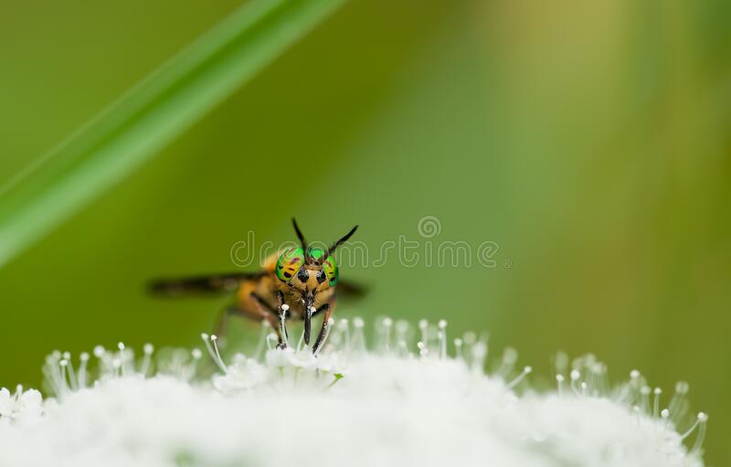 Yellow Green and Black Bee on White Flower during Day Time stock photo