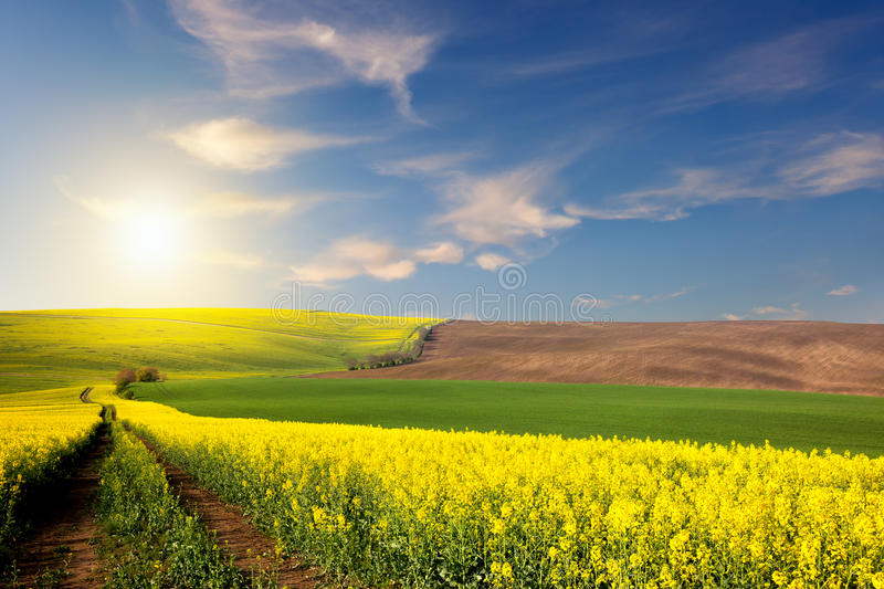 Yellow, green, brown fields and ground road overlooking a valley royalty free stock images