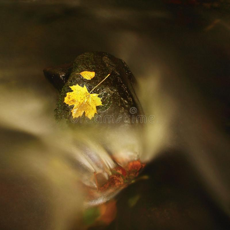 Yellow green death maple leaf in stream. Autumn castaway on wet mossy stone in cold blurred water of stream. Yellow green death maple leaf in stream. Autumn royalty free stock images