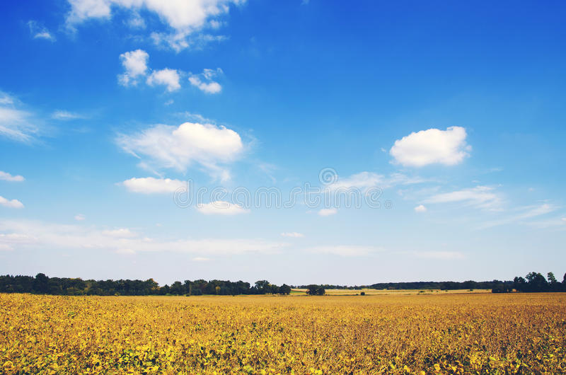 Free Public Domain CC0 Image  Yellow And Green Field Under Blue ... d66744df4bb