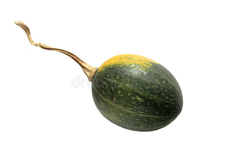 Download Yellow and green gourd stock photo. Image of harvest, decoration - 3450846