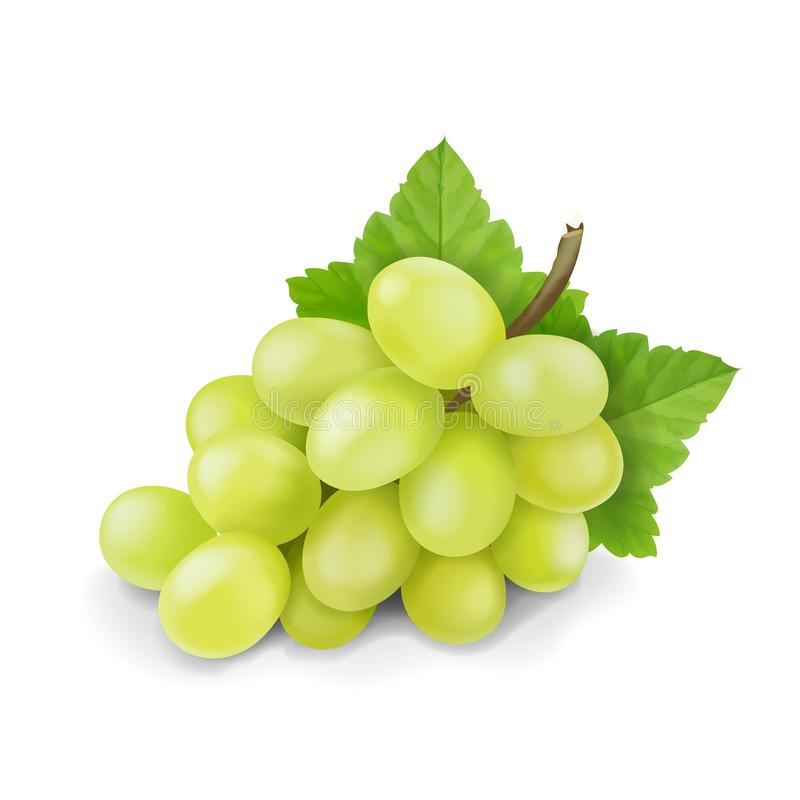 Yellow or green grapes branch with leaves isolated. Grape icon. Realistic vector.  stock illustration