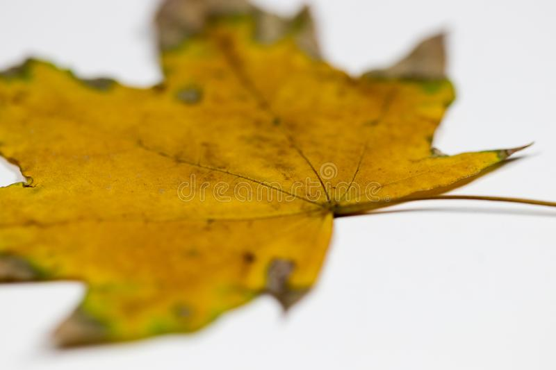 Yellow and green leaf royalty free stock image