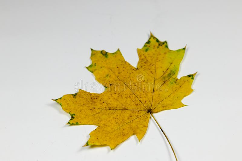 Yellow and green leaf royalty free stock images
