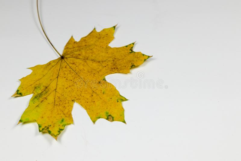 Yellow and green leaf stock images