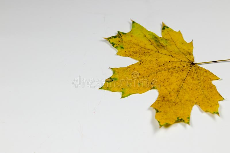 Yellow and green leaf stock photos