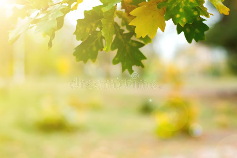 Yellow green leaves on a blurred nature royalty free stock photos