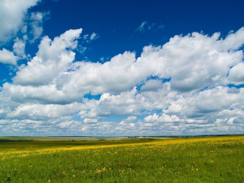Yellow-green meadow royalty free stock photos