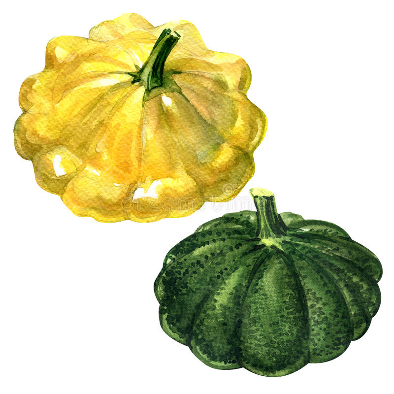 Yellow and green patty pan squash isolated on white background stock illustration