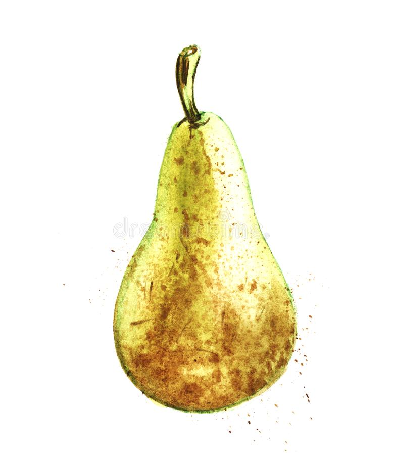 Yellow-green pear conference. Hand-drawn watercolor illustration. Yellow-green and brown pear conference. Hand-drawn watercolor illustration on a white vector illustration
