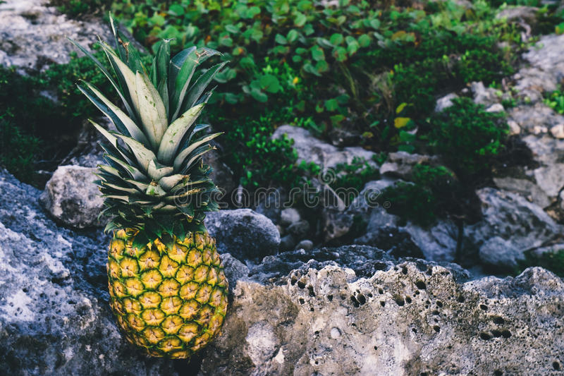 Yellow And Green Pineapple On Top Of Rock Formation Free Public Domain Cc0 Image