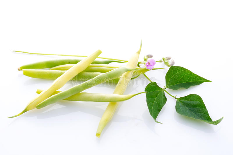 Yellow and green string bean with leaves and blossom isolated. On white royalty free stock photos