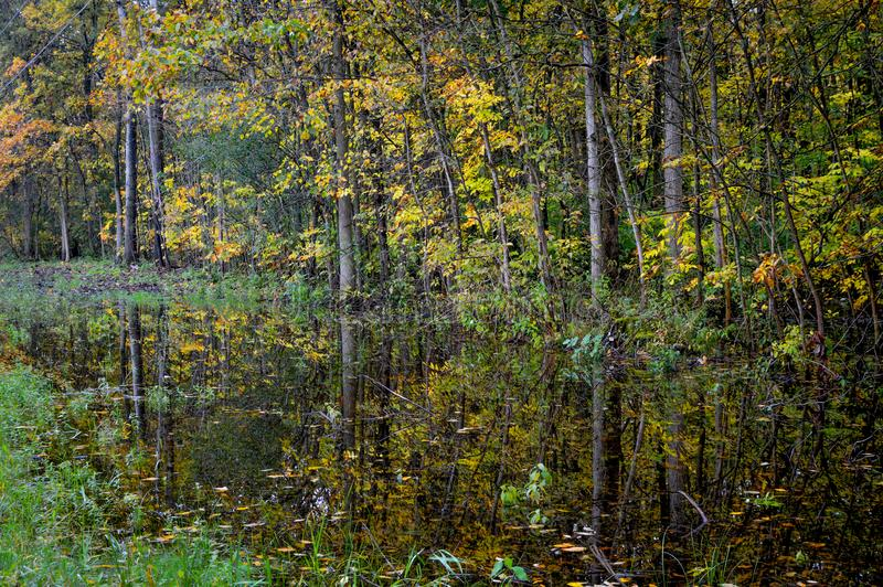 Yellow and Green Trees Reflected in Water royalty free stock images