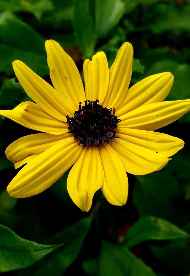 yellow royaltyfri bild