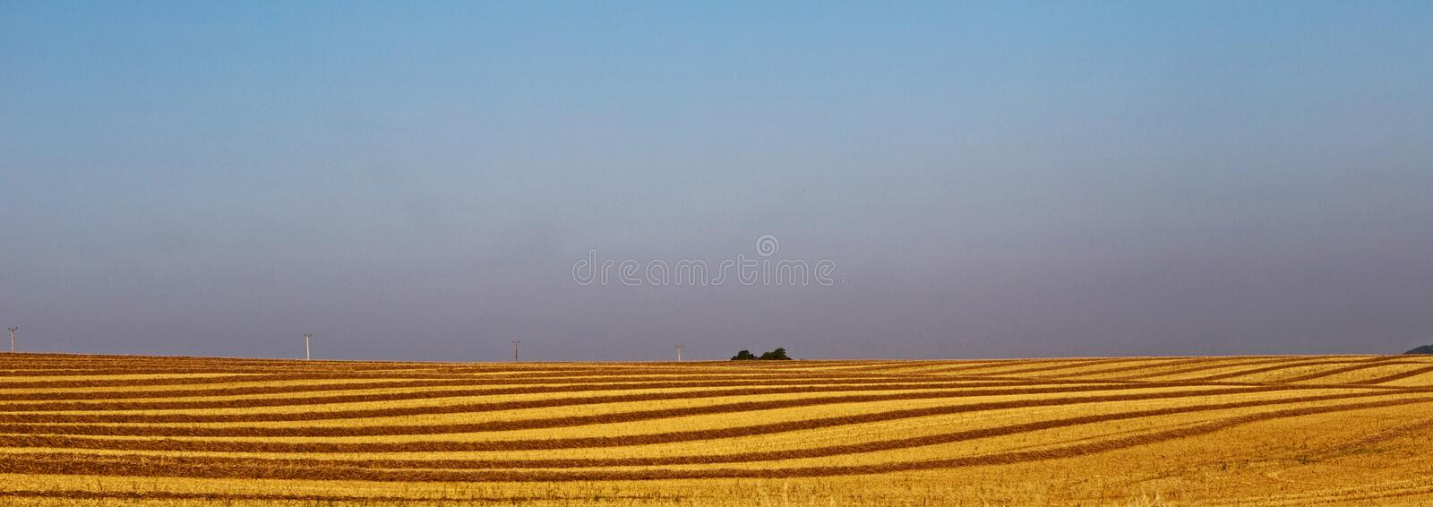 Yellow harvested wheat field royalty free stock photo