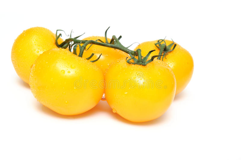 Yellow Heirloom Tomatoes. Heirloom tomatoes attached to a short section of vine isolated on a white background royalty free stock photography
